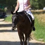 Pferde_02