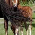 Pferde_13